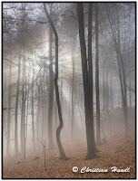 Triestingtal im Herbst