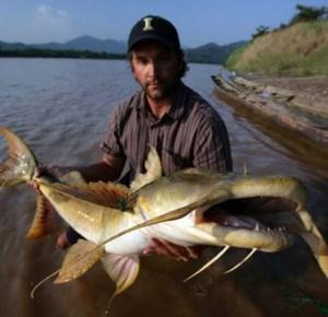 artikel-populer.blogspot.com - Ikan-ikan Monster Penguasa Sungai