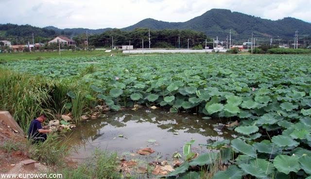 Pescando en un estanque de lotos
