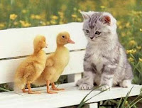 cuidar el Hogar de tus gatos uñas