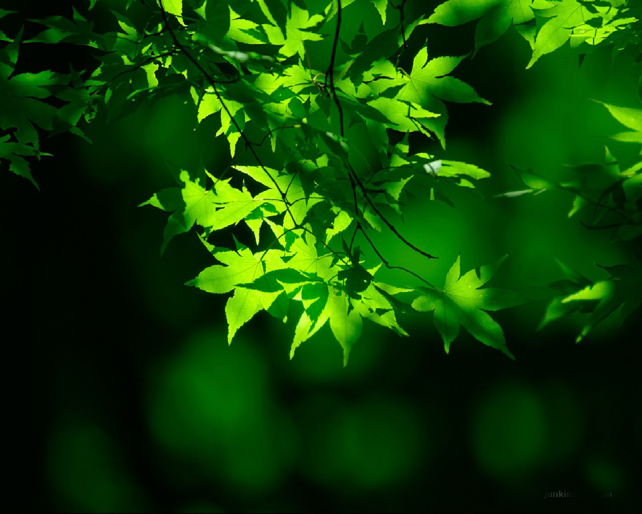 All Images Wallpapers Natural Green Wallpaper