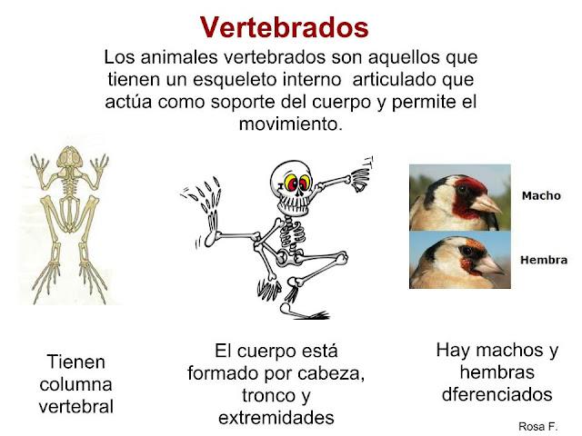 Maestra de Infantil: Las Ballenas. Características, alimentación ...