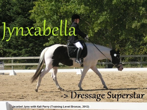 Jynxabella -> Dressage (and jumping!) superstar