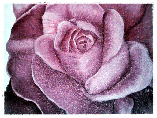 Pretty in Pink Rose Oil Painting