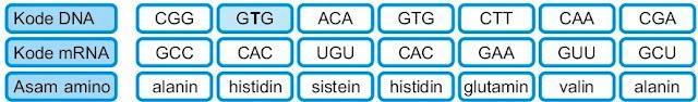Substitusi nukeotida mutasi gen