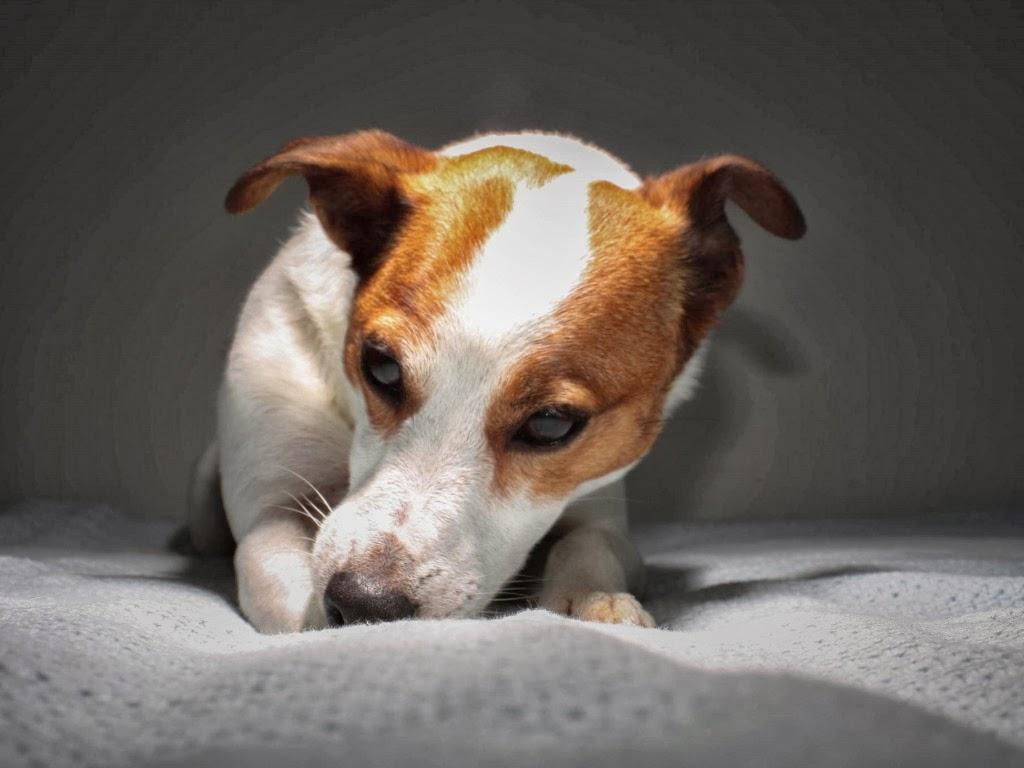 """<img src=""""http://4.bp.blogspot.com/-aNTAbXSSKBI/UtqeHIwrxwI/AAAAAAAAI00/S8LidTNVLdQ/s1600/dog-wallpapers.jpeg"""" alt=""""sad dog"""" />"""
