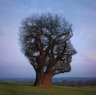 شجرة على شكل وجه انسان