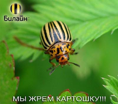 операторы сотовой связи - мошеники
