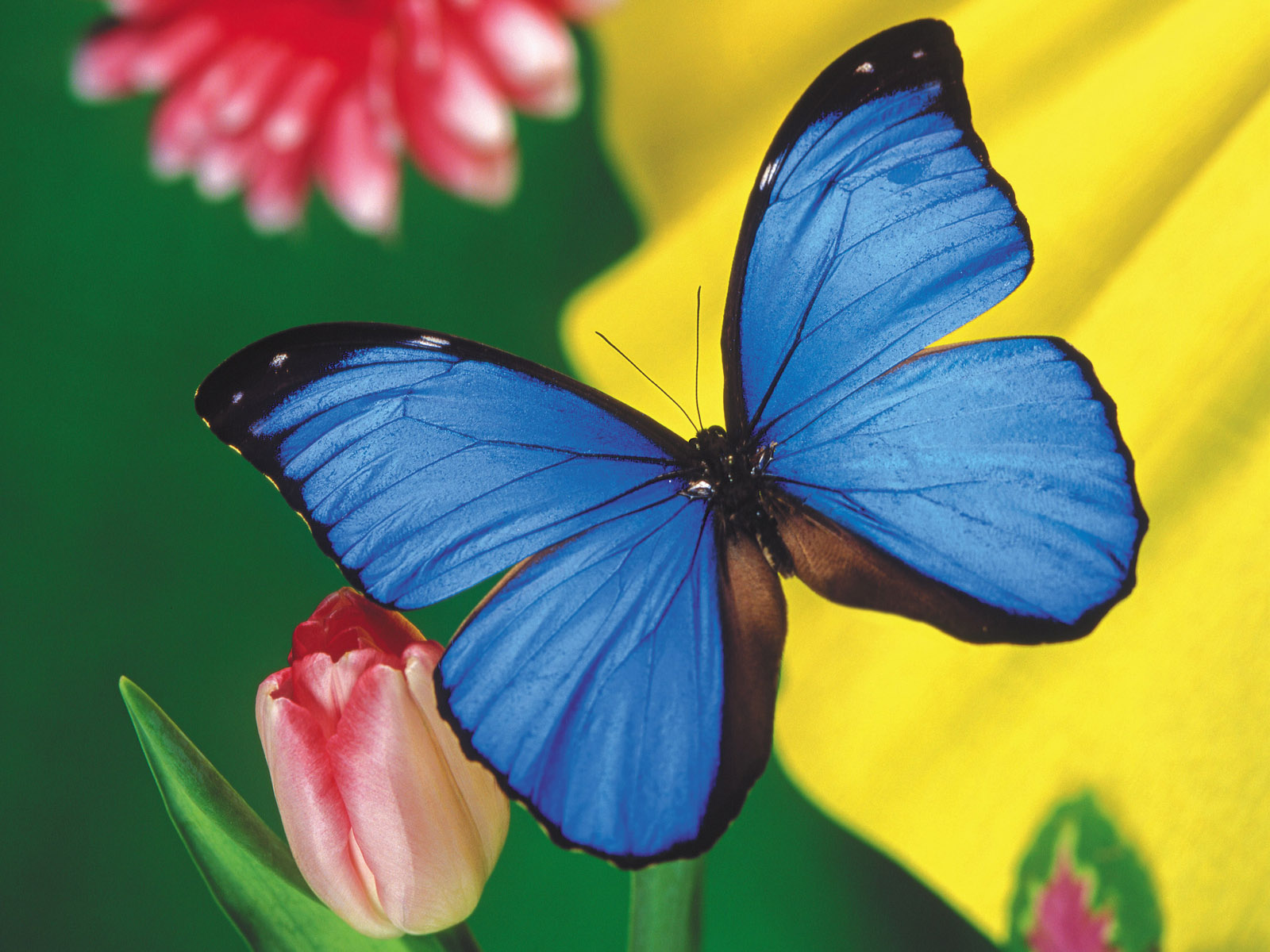 111 Beautiful Butterflies Wallpapers