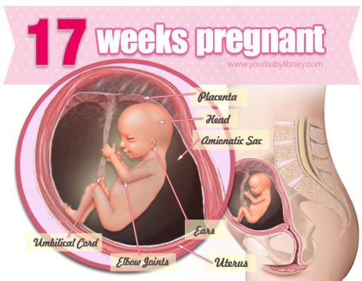 gravid uden menstruation dating d
