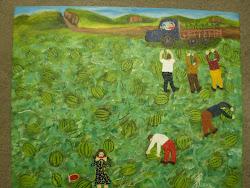 colheita de melancia 2