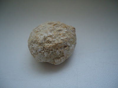 Fossil Turtle Egg