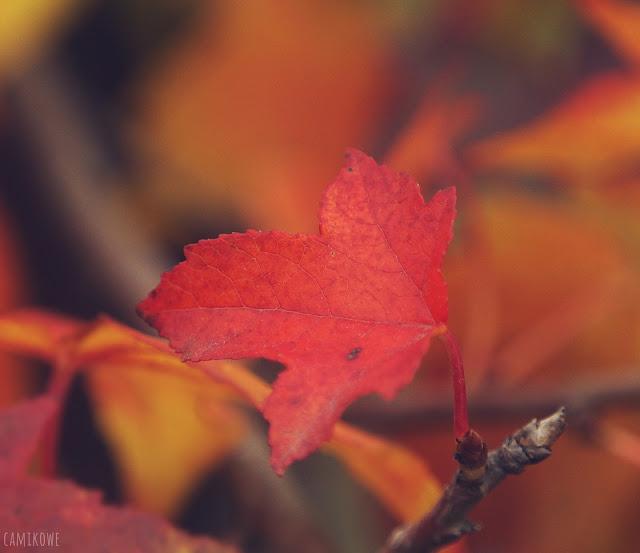 ambrowiec jesienią