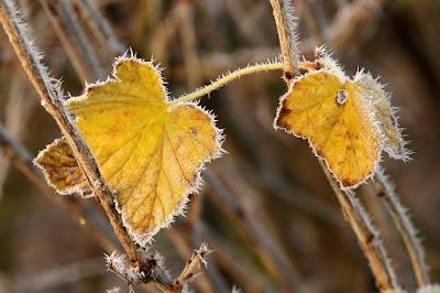 időjárás, Székelyföld, Csíkszereda, ősz, fagy, fagypont