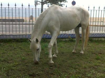 Alicia Talaya - Teràpies a Cardedeu - el cavall blanc