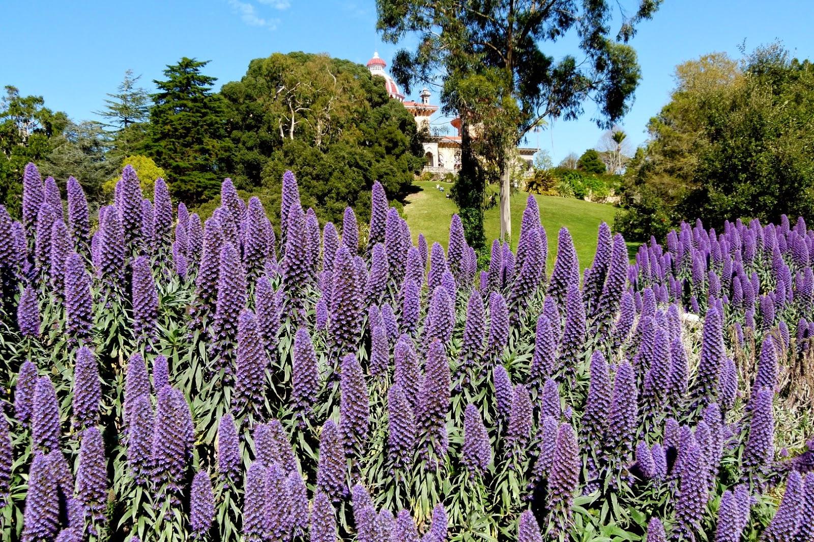 Flores naturais da Ilha da Madeira, Portugal Fotos Rotas  - Fotos De Flores Da Madeira