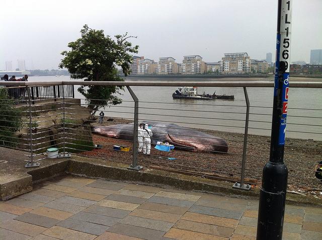 Beached Whale Art in Greenwich, London