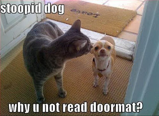 funny cat and dog stoopid dog