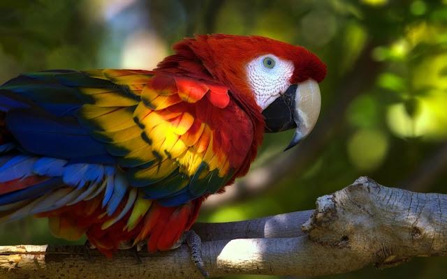 Hermoso Papagayo de Brillantes Colores Imagenes de Aves Exoticas
