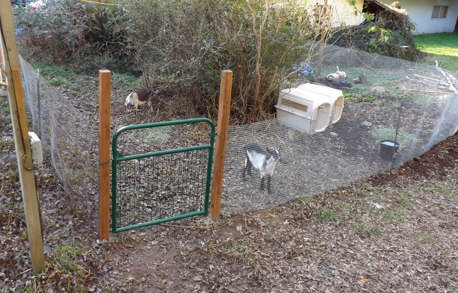 Tom Sebourn Blog Goat Corral Pre Grand Opening