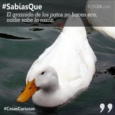 #SabíasQue El graznido de los patos no hacen eco …