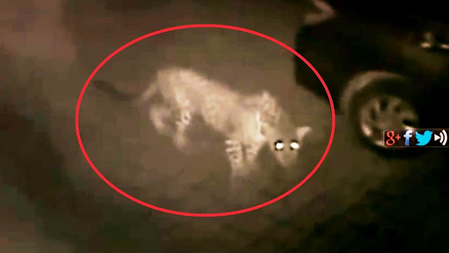 Aarti and Santosh Gupta, a couple from Thane area were horrified to see their CCTV footage capturing a leopard and her cub in their yard, next to their parked car.