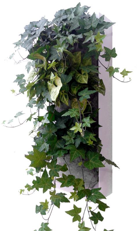 como en todas nuestras jardineras verticales las bolsas de fieltro son y se montan y desmontan con un velcro patent num es u
