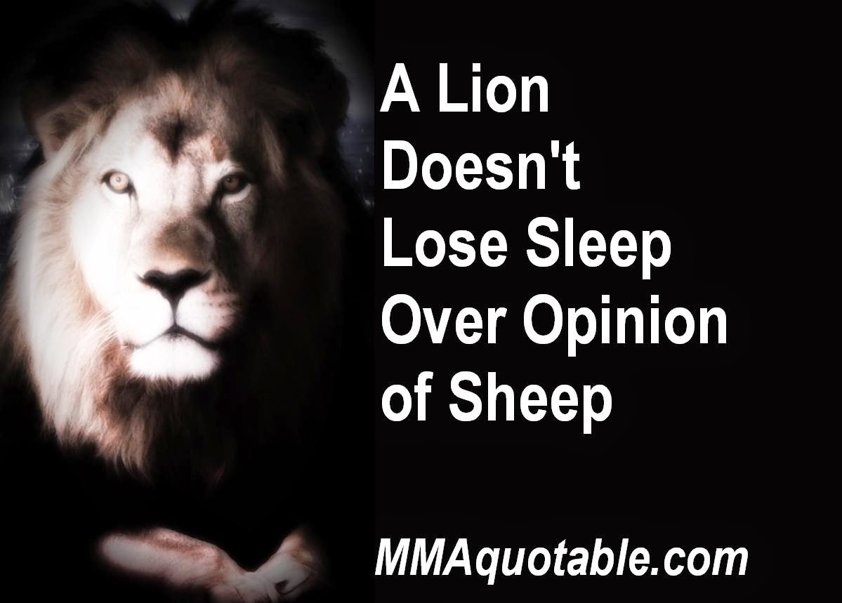 Motivational Quotations Motivational Quotes With Pictures Many Mma & Ufc A Lion Doesn't