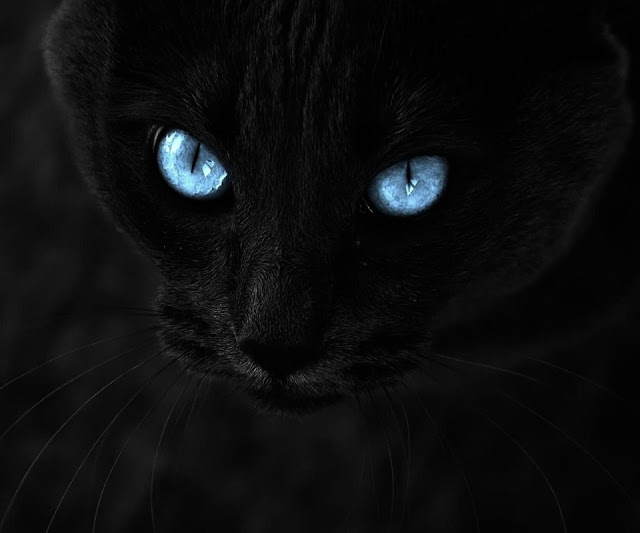Черная кошка обои на андроид