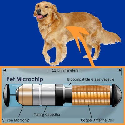 saravanan s blogs tamil nadu soon pet dogs to have microchip tags