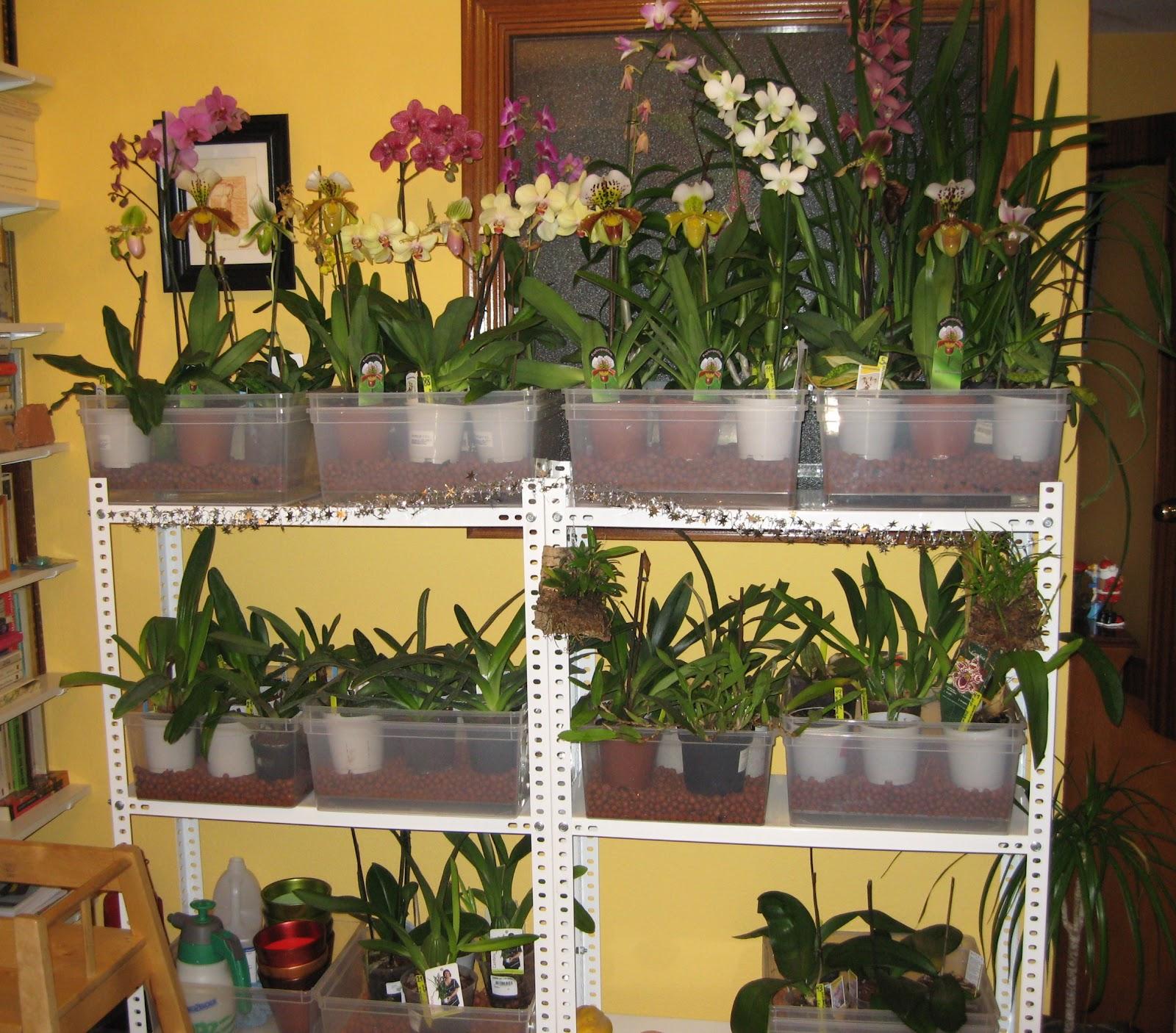 Colocar orqu deas en casa otra soluci n for Como poner plantas en la pared