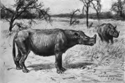Perissodactyla prehistoricos Diceratherium