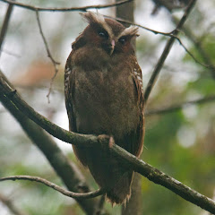 BIRD OF THE MONTH (click to know more)