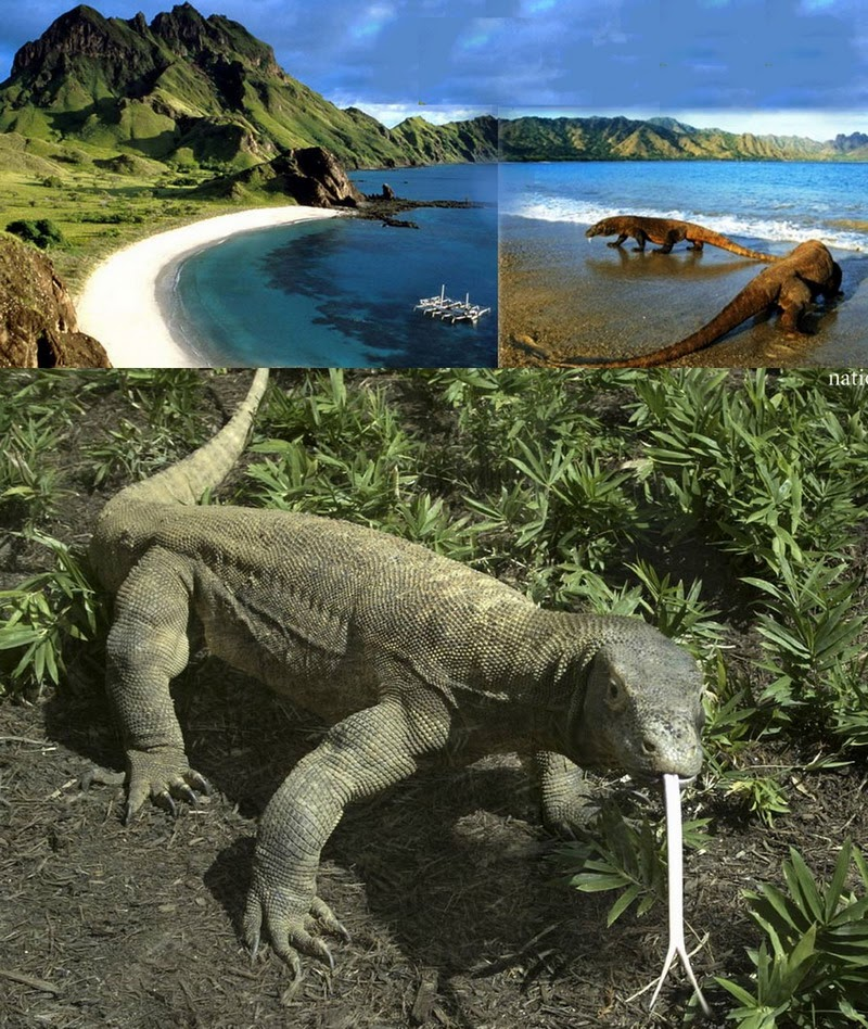 Komodo Island Movie Komodo Island is One of The