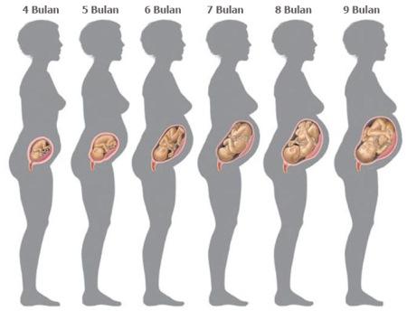 Fase kehamilan