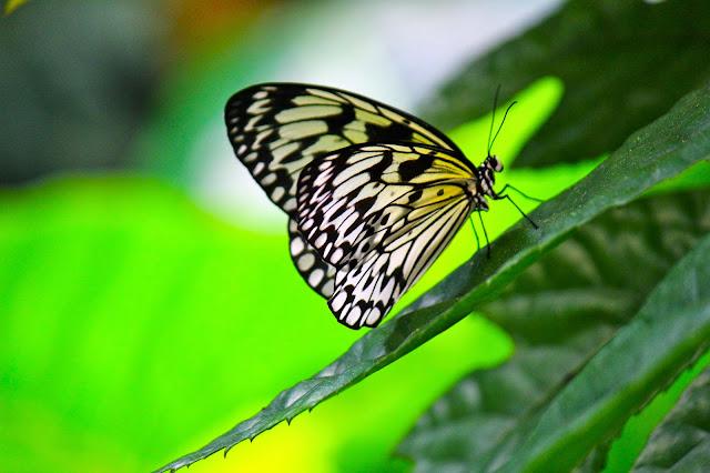 Butterflies at Museum of Otago Dunedin