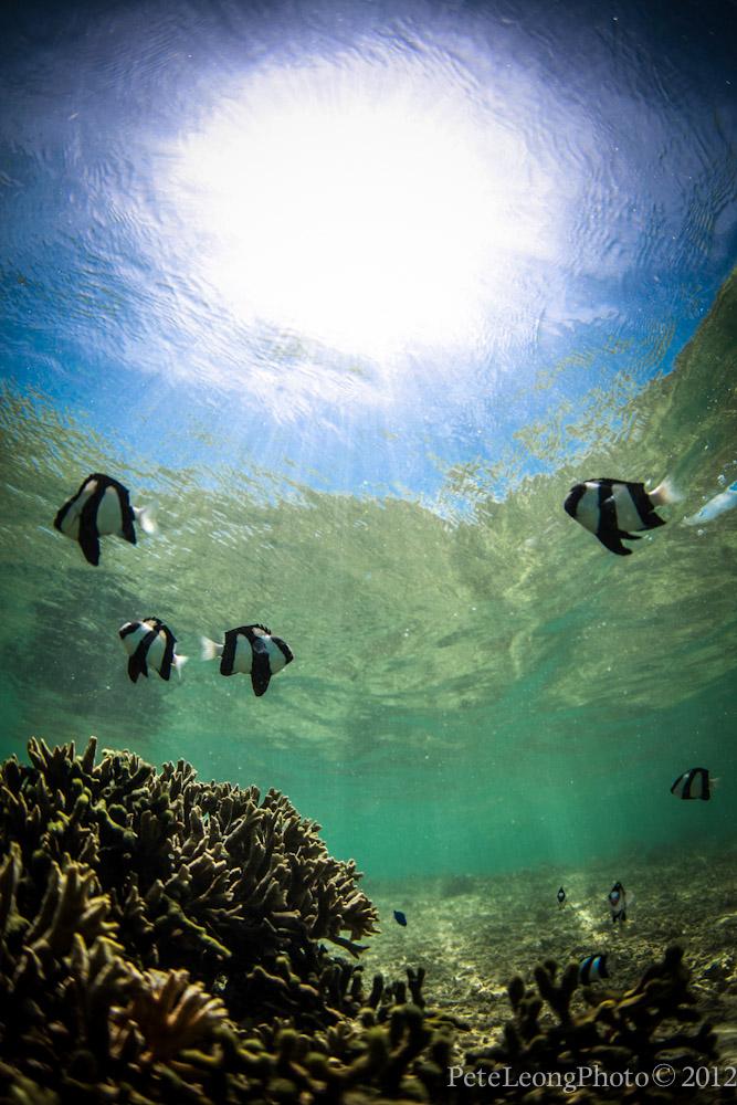 New ikelite underwater housing for canon 5dmkii for Happy fish swimming
