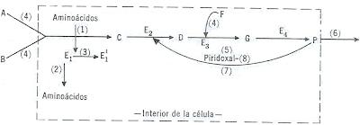 external image meta.png