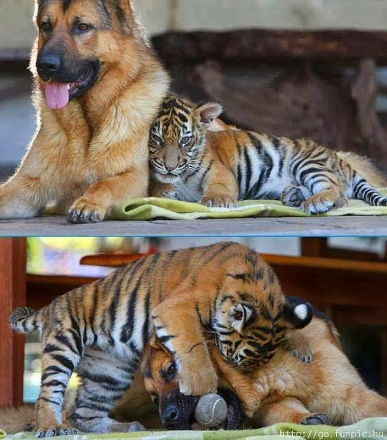 6 strange and amazing animal friendships