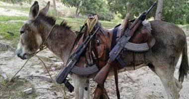 """اخبار داعش اليوم: """"داعش"""" تفخخ القطط وتجند الحمير والأحصنة"""