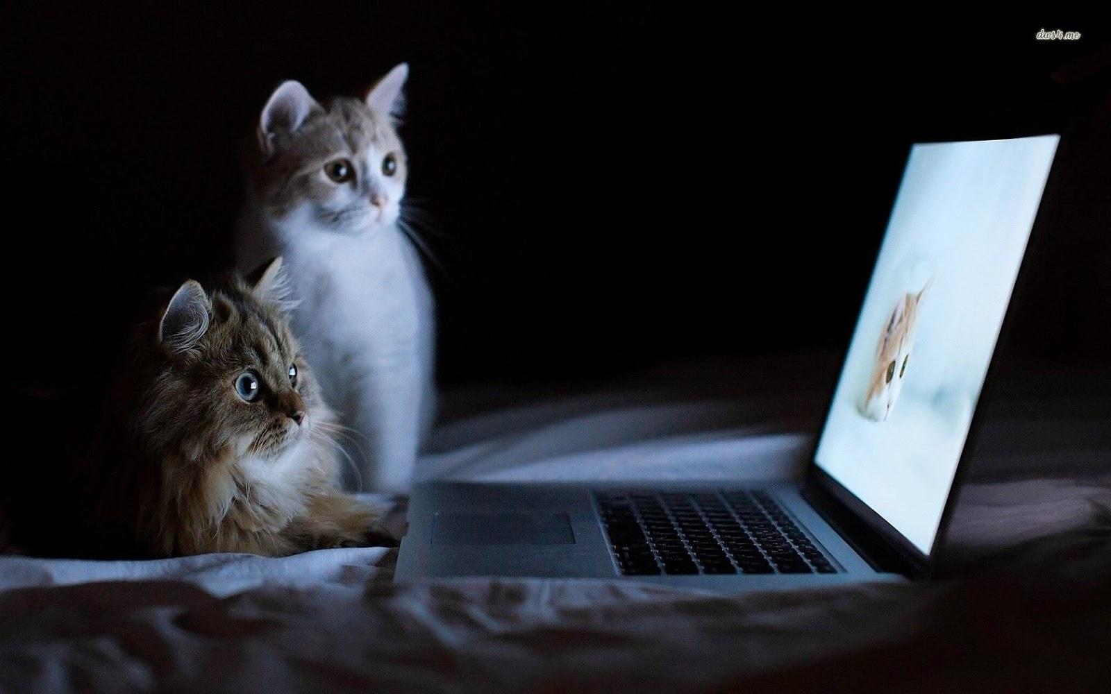 إنتبه قبل ان تشتري ! ليست جميع الحواسيب المحمولة هي عبارة عن لابتوب تعرف على الفرق بين Laptop و Notebok وultrabook و netbook 16794-cats-watching-cats-1680x1050-animal-wallpaper