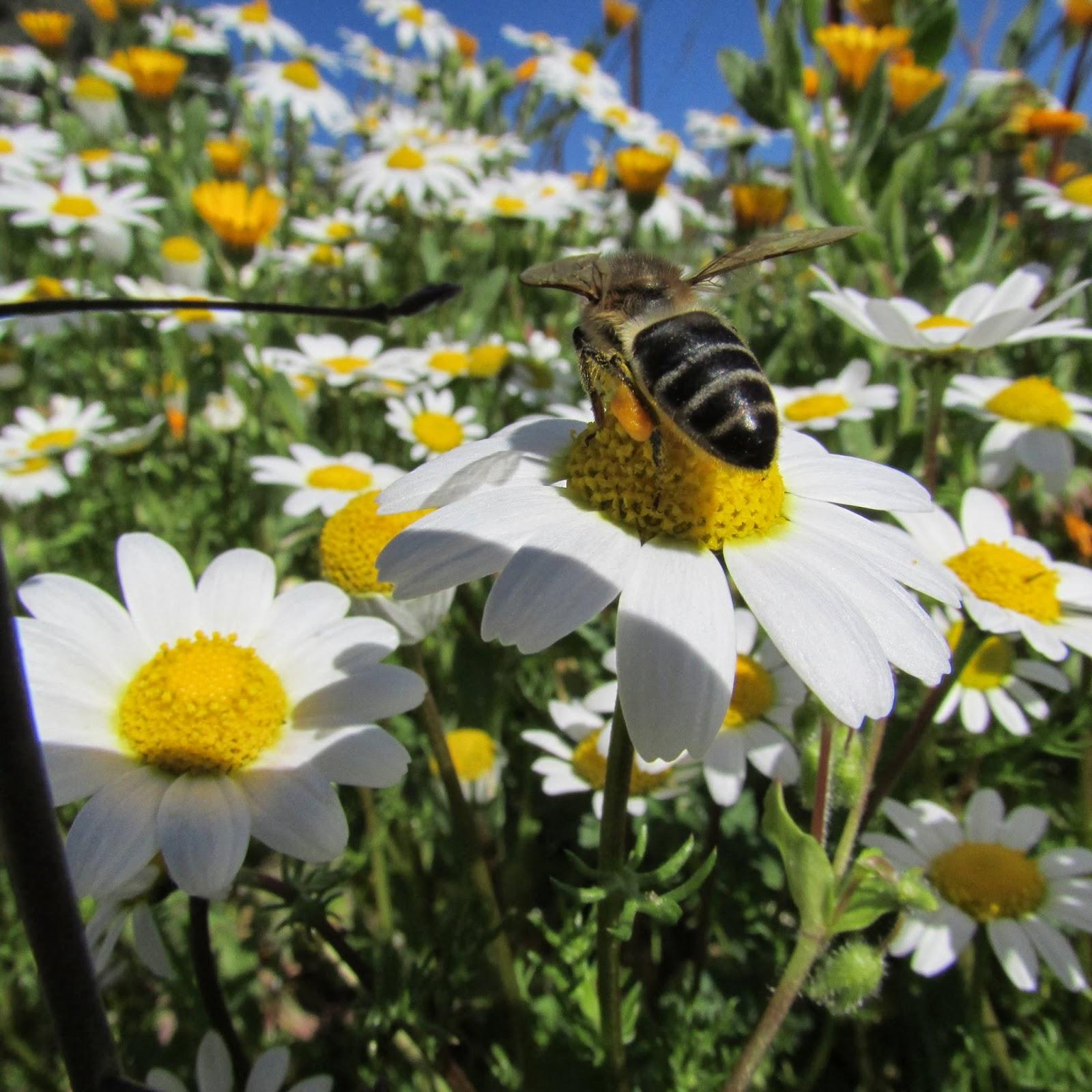Las primeras abejas empiezan a nacer la colmena ya for Ahuyentar abejas jardin