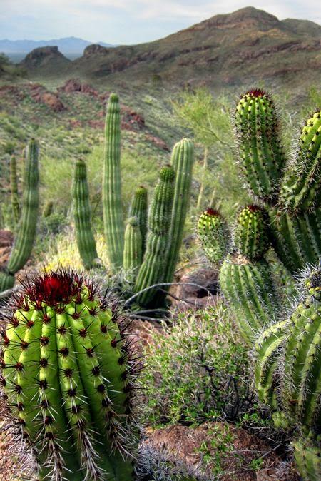 Organ Pipe Cactus NM (AZ)... I've been there; I camped there with my wife; it was exhilarating! Sadly, the threat from illegal boarder crossings and drug trafficking will forever prohibit my return.