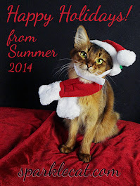 Happy Holidays Summer and family!