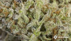 Strain Review: Chernobyl