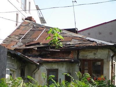 se poarta si case cu terase verzi