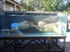 Fish tanks for sale craigslist 150 gallon fish tank for for Craigslist fish tank
