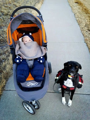 Winter walk with baby in stroller and dog