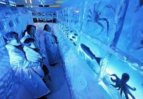 Aquarium Beku Pertama Di Dunia