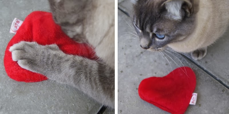 category cats